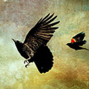 Crow And Red-winged Blackbird Art Print