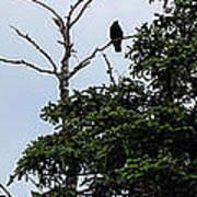 Crow - Black  Bird - Loud Call Art Print