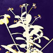 Crown Of Thorns - Indigo Art Print by Shawna Rowe