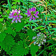 Crown Vetch And Catnip In Pipestone National Monument-minnesota Art Print