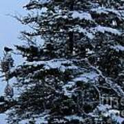 Crows Perch - Snowstorm - Snow - Tree Art Print