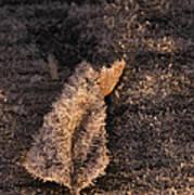 Crystal Leaf Art Print