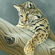 Curiosity - Young Bobcat Art Print