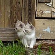 Curious Kittens Art Print