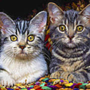 Curious Kitties Art Print