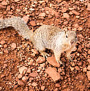 Curious Squirrel 2 Art Print