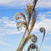 Curled Grasses Art Print