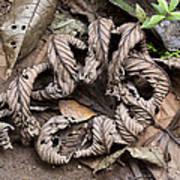 Curled Leaves Art Print