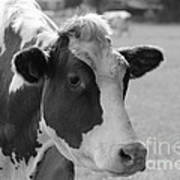 Cute Cow - Black And White Art Print