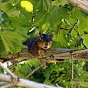 Cute Fuzzy Squirrel In Tree Art Print