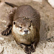 Cute Otter Portrait Art Print