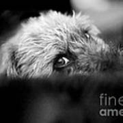 Cute Pup Sneek A Peek Art Print