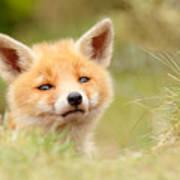 Cutie Face _red Fox Kit Art Print
