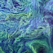 Cyanobacteria Bloom Art Print