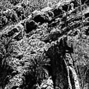 Cycads At Cliffs' Edge Black And White Art Print