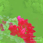Cyclamen Dream Art Print