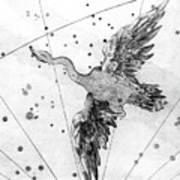 Cygnus Constellation Art Print