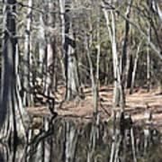 Cypress Bog Art Print