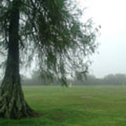 Cypress In The Mist Art Print