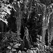 Cypress Knee Art Print