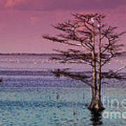 Cypress Purple Sky Art Print