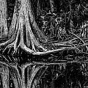 Cypress Roots - Bw Art Print