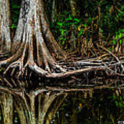 Cypress Roots Print by Christopher Holmes