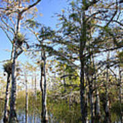 Cypress Swamp Art Print by Rudy Umans