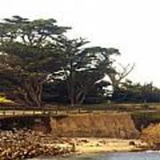 Cypress Trees On 17 Mile Drive Art Print
