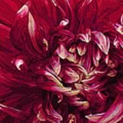 D Light Ful Dahlia Art Print