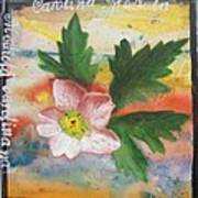Texas Wildflowers Tp X Art Print