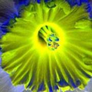 Daffodil Dreams - Photopower 1904 Art Print