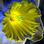 Daffodil Dreams - Photopower 1907 Art Print