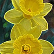 Daffodil Duet By Jrr Art Print