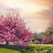 Daffodil Hill Art Print