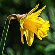 Daffodil - Impressions Art Print
