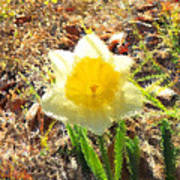Daffodil Under Water Art Print