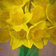 Daffodils 10 Art Print