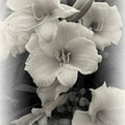 Daffodils Emerge Art Print