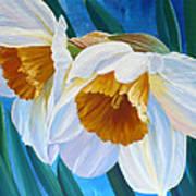 Daffodils Narcissus Art Print