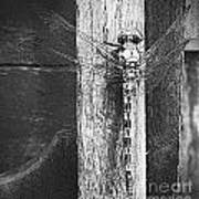 Dagonfly Post Art Print by Annette Allman