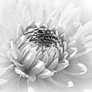 Dahlia Flower Soft Monochrome Art Print