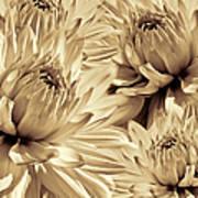 Dahlia Flowers Bouquet Sepia Art Print
