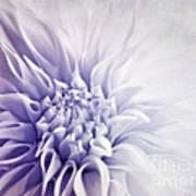 Dahlia Sun Art Print
