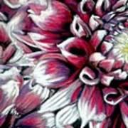 Dahlias In Pastel Art Print