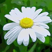 Daisey Flower - Looks Like A Painting Art Print