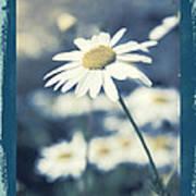 Daisies ... Again - 146a Art Print