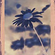 Daisies ... Again - 150ab Art Print