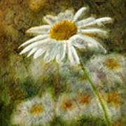 Daisies ... Again - P11at01 Art Print