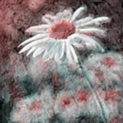 Daisies ... Again - P11ac2t1 Art Print